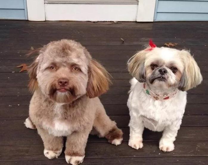 Собака вразила користувачів соцмереж / фото Chantal Desjardins