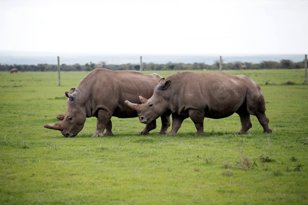 Носорог \ REUTERS