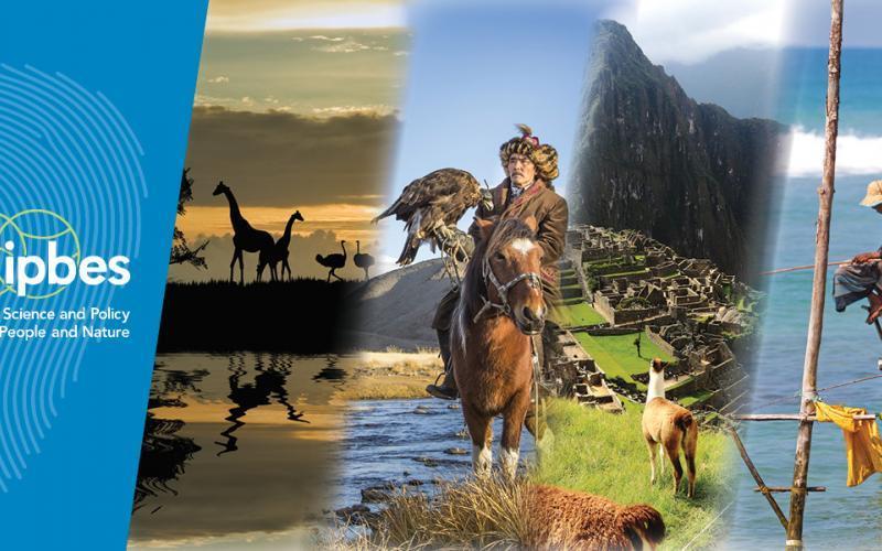 ООН попередила, що до 2100 року в Африці вимре половина видів тварин / фото IPBES