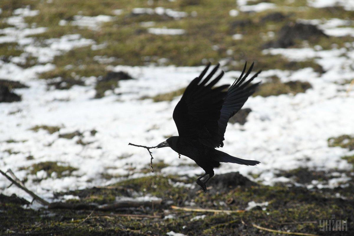 2 марта - День считания ворон / фото УНИАН