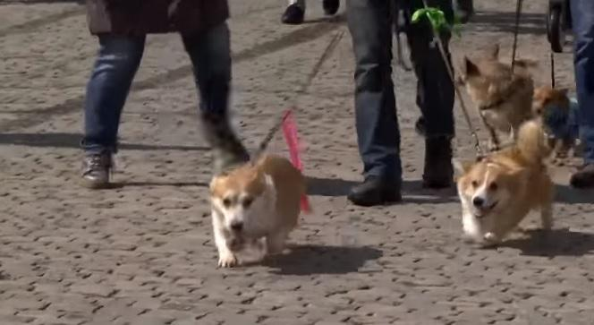 У більшості із учасників ходи – позаду важкі випробування / скріншот відео ТСН
