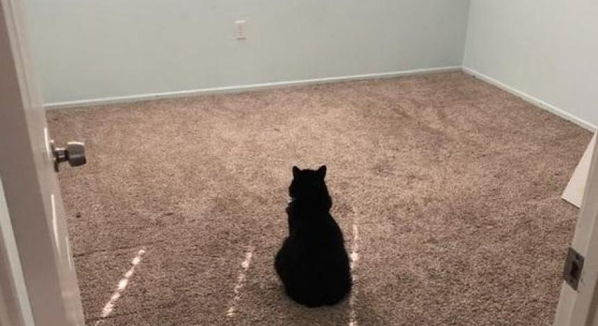 Кошка в печали растрогала пользователей сети (фото)
