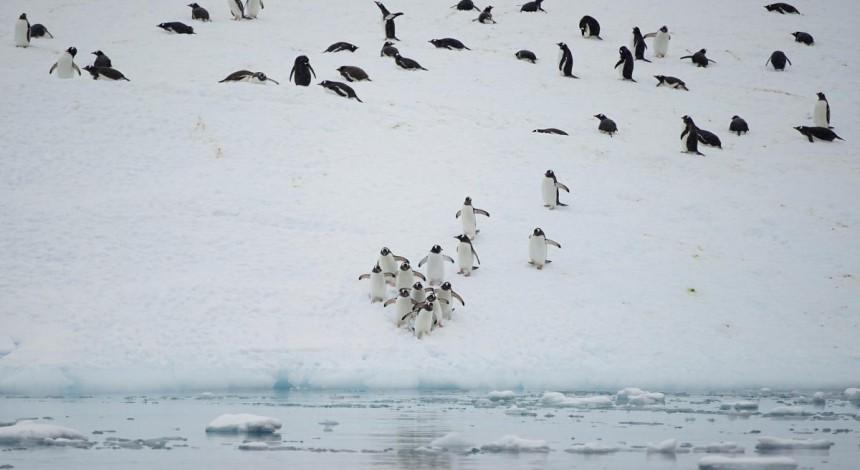 Ртуть, хімікати і кофеїн з нікотином: вчені розповіли, які забрудники виявлили у флорі та фауні Антарктики