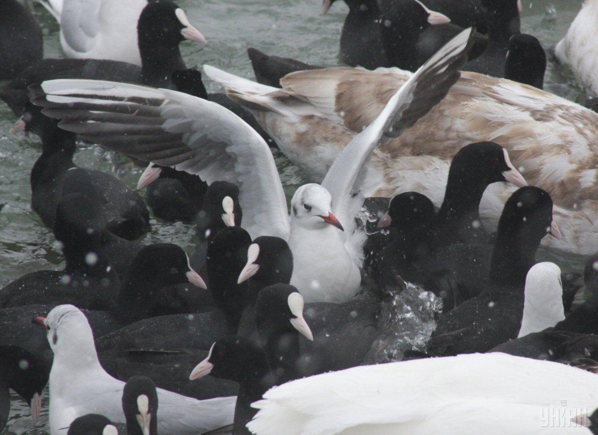 1 апреля вся планета отмечает Международный день птиц / фото УНИАН