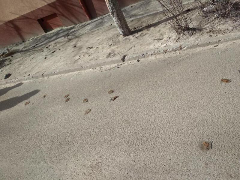 В Днепре совершили массовое убийство краснокнижных животных / фото facebook.com/shpitun.lyuda
