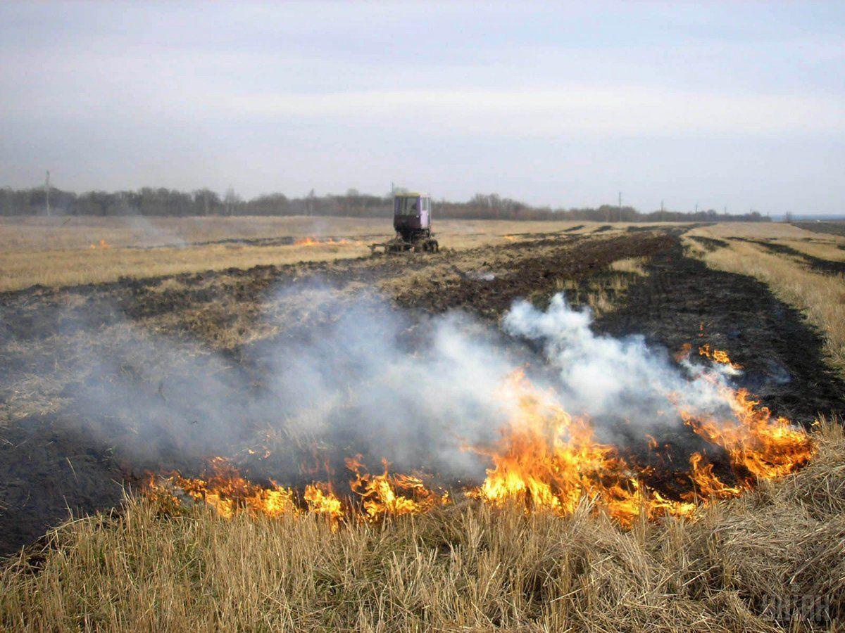 Мінприроди виступає за суттєве підвищення штрафів за випалювання рослинності / фото УНІАН