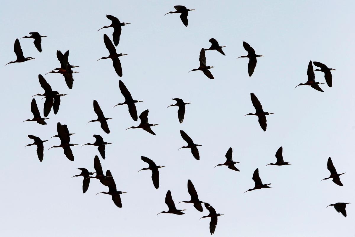 В субботу - Всемирный день мигрирующих птиц / REUTERS