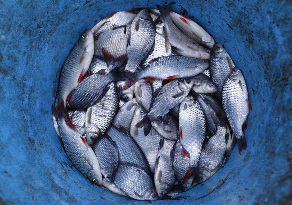 В Украине с 1 апреля запретили нерестовый лов рыбы / REUTERS