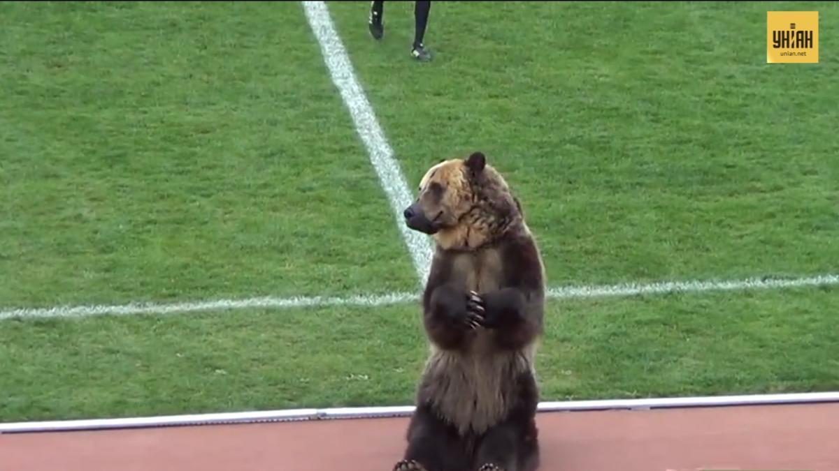 «За межею розуміння»: виступ ведмедя на футболі в РФ обурив захисників тварин