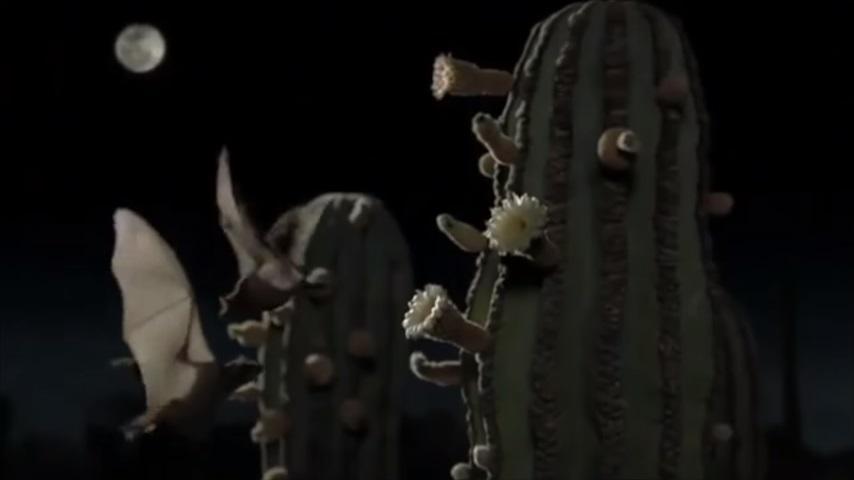 Длинноносаялетучаямышь больше не вымирающий вид / скриншот видео Angelica Menchaca