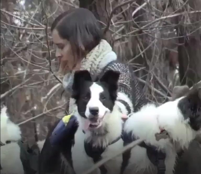 У Чилі три колі рятують ліси, розносячи насіння рослин / скріншот відео