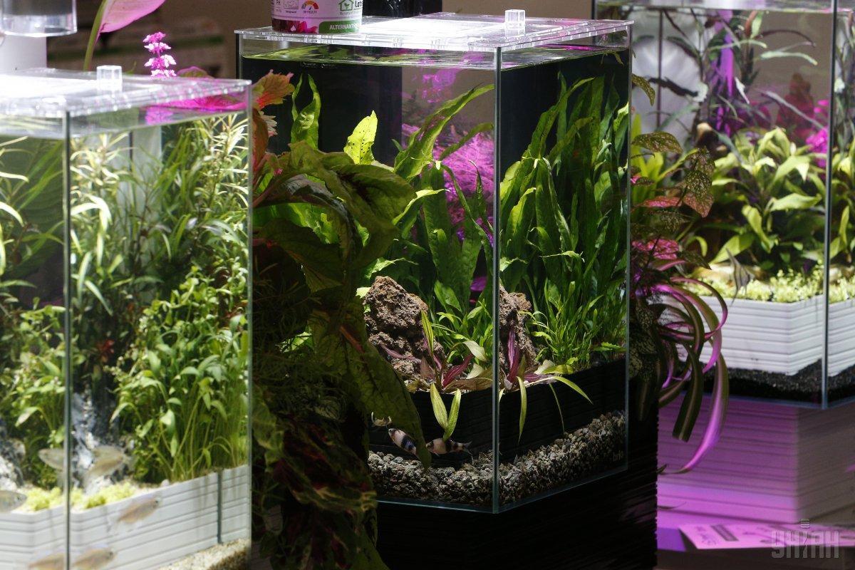 Хакери зламали акваріум / фото УНІАН