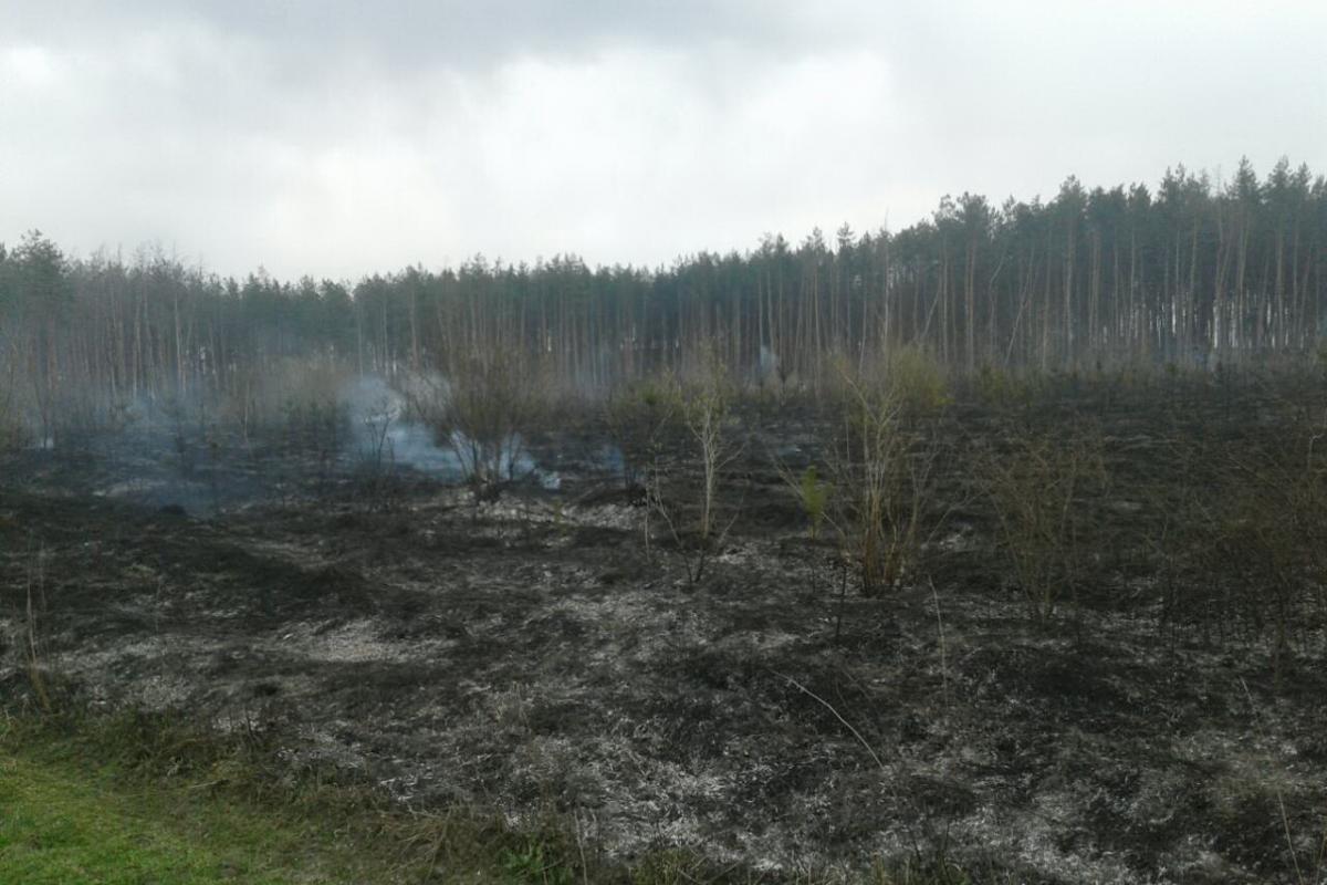 На Харьковщине за сутки произошло 10 природных пожаров / ГСЧС