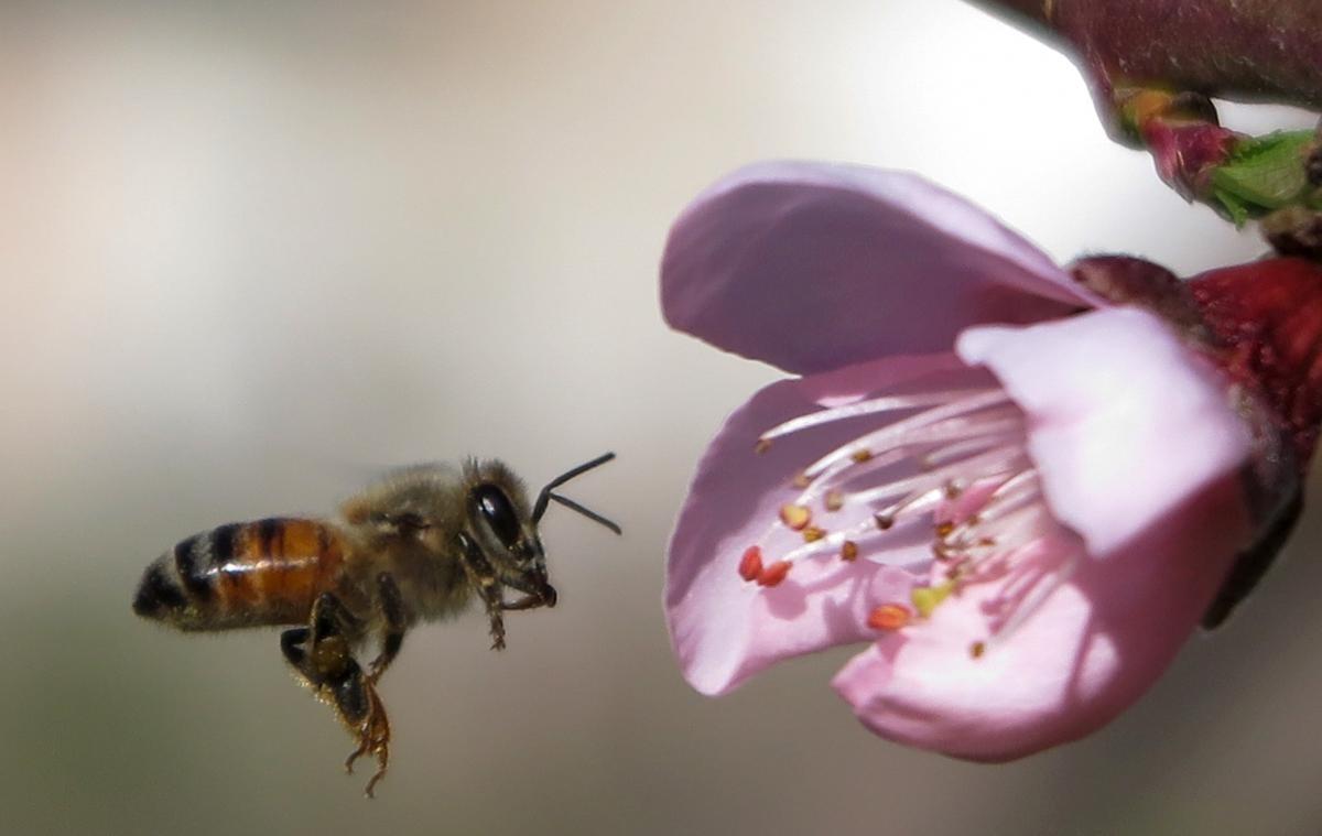 Раніше вчені змогли довести шкоду цих інсектицидів для бджіл / Ілюстрація REUTERS