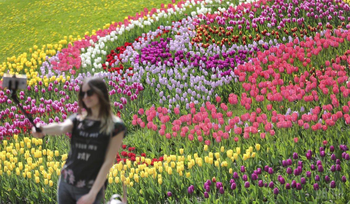 Щороку виставка тюльпанів на Співочому полі приваблює чимало відвідувачів / Фото УНІАН