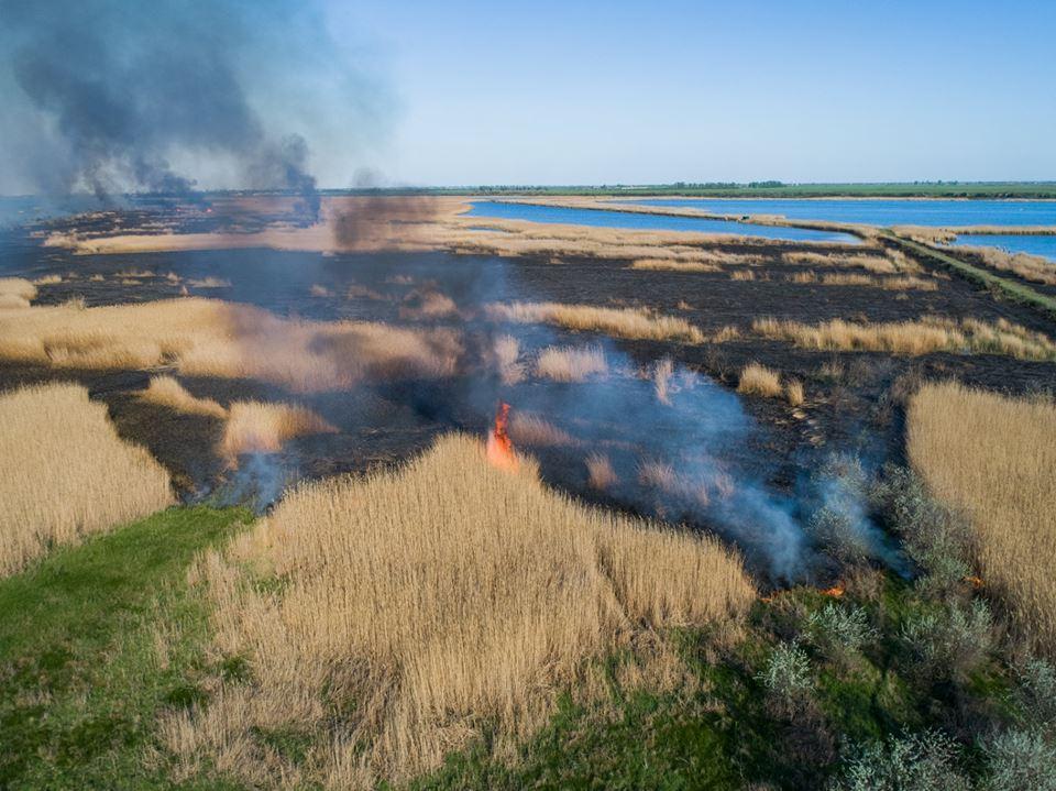 Сжигая сухостой, люди уничтожают все живое, что есть в траве и почве / фото Павла Пашку и Олега Марчука/Ukraїner