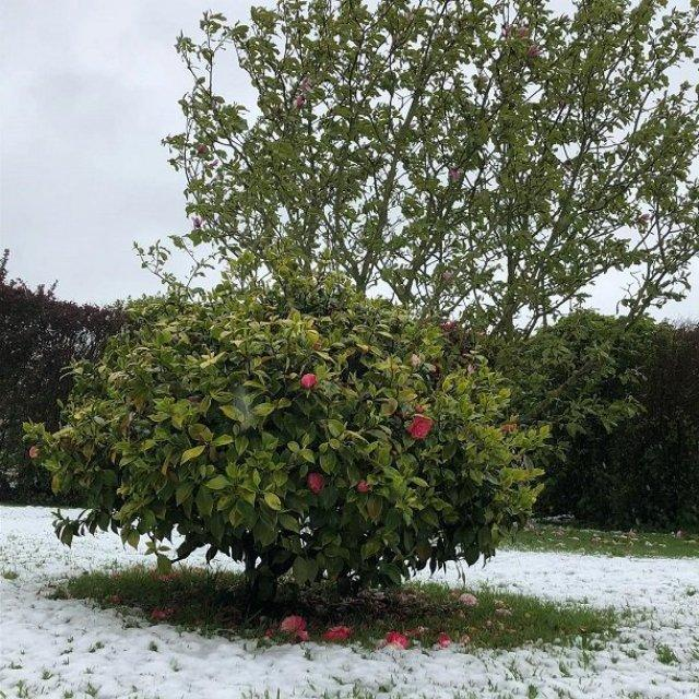 Впоследний день апреля вофранцузской Нормандии выпал снег