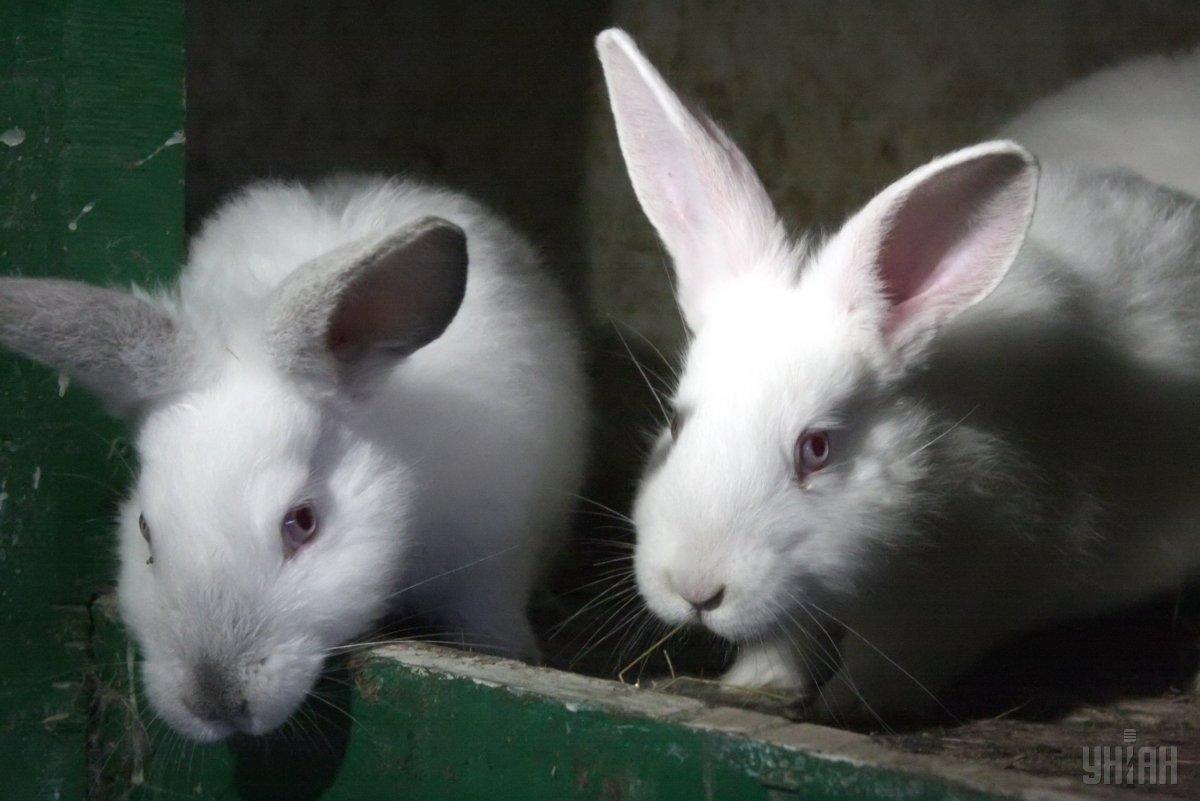 ЄС хоче домогтися повної заборони тестування косметики на тваринах / Фото УНІАН