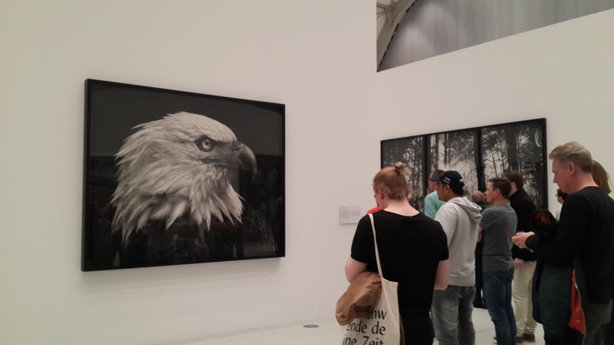 Черно-белая выставка Proof в музее Дайхторхаллен / Фото Марина Григоренко