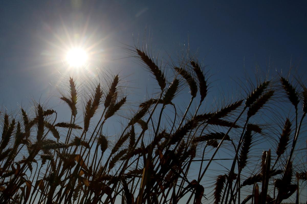 Украинские аграрии уже экспортировали практически 34 млн. тонн зерновых