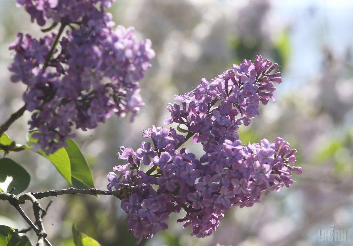 Погода в мае будет переменчивой / фото УНИАН