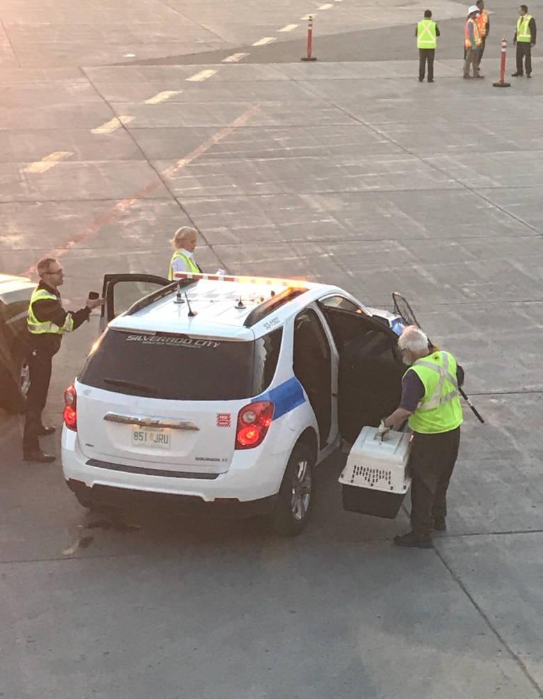 ВКанаде застрявший всамолете енот сорвал рейс