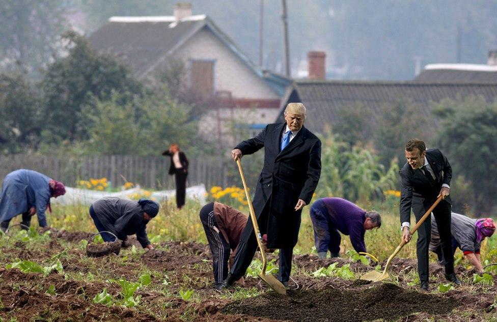 картинки на тему копаем картошку поклонников