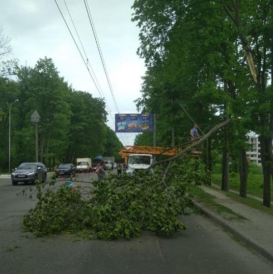 Сильный ветер сломал дерево, которое упало на проезжую часть / фото twitter.com/h_kharkov