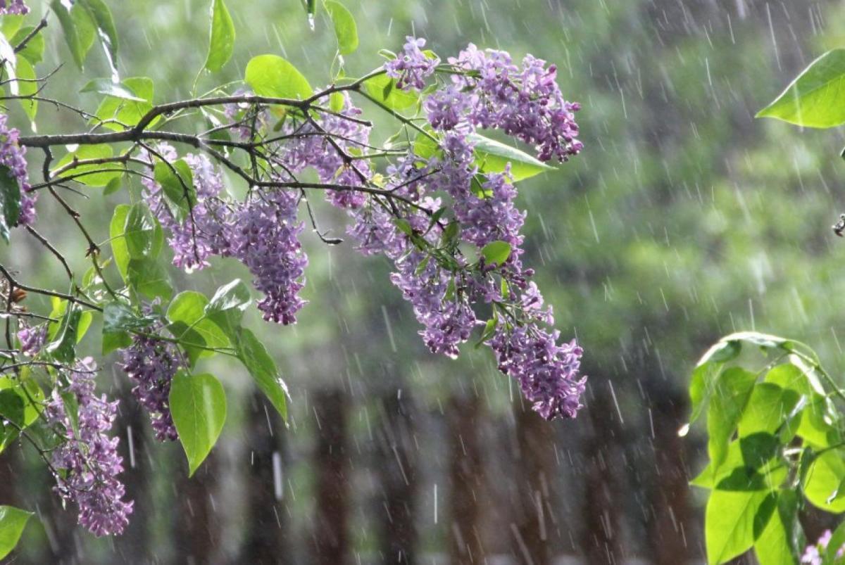 В апреле украинцам обещают дожди / Фото daynews.com.ua