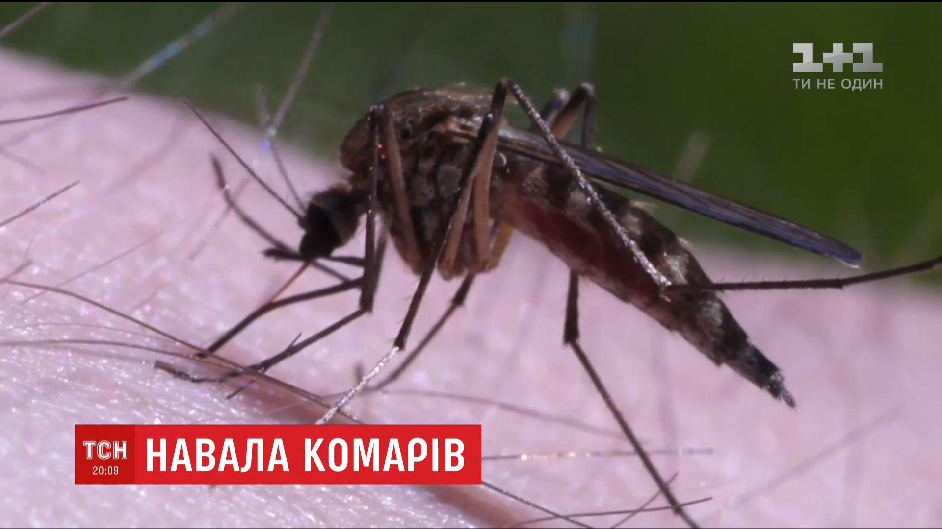 Кадр из видео ТСН
