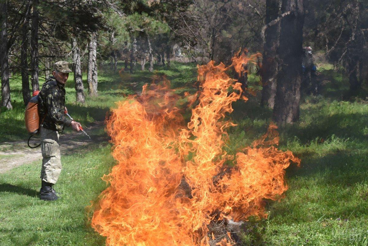На Луганщине обстрел боевиков привел к возникновению лесного пожара площадью около 15 гектаров / фото УНИАН