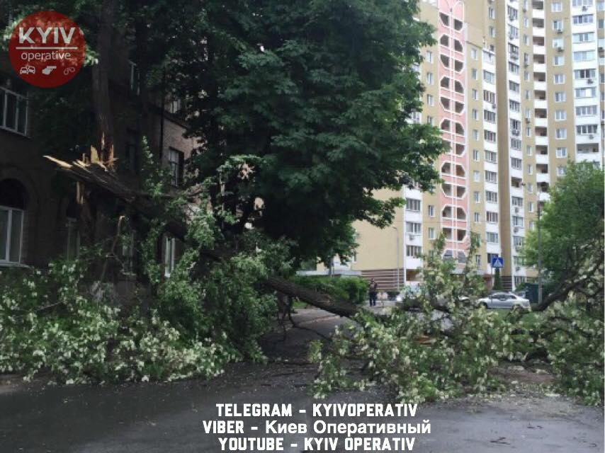 У Києві дерева почали падати на дороги від вітру/ Facebook - Київ Оперативний