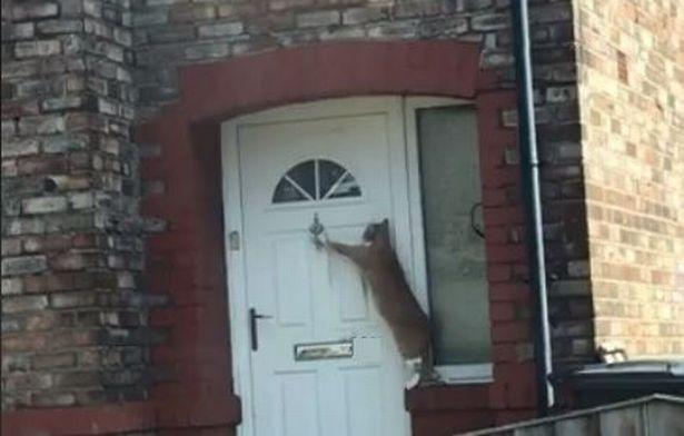 Кошка терпеливо ждала, пока ей откроют / фото liverpoolecho.co.uk