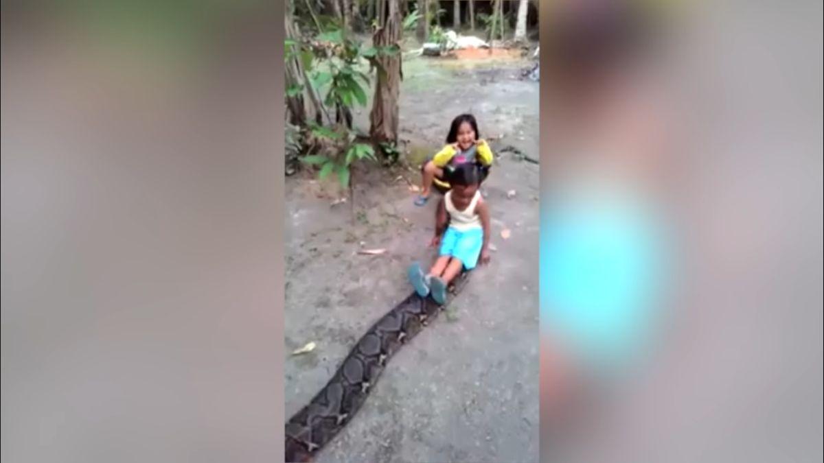 Дівчатка катаються на пітоні і виглядають щасливими / скріншот відео, Dog News Virals
