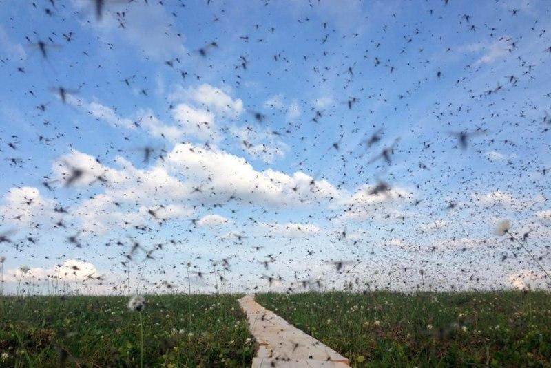 Небувала кількість комарів атакує Воронезьку область / фото Оксана Матвєєва/vk.com