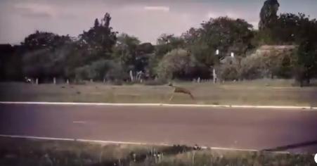 Оленьи бегают прямо по гордским улицам / скриншот