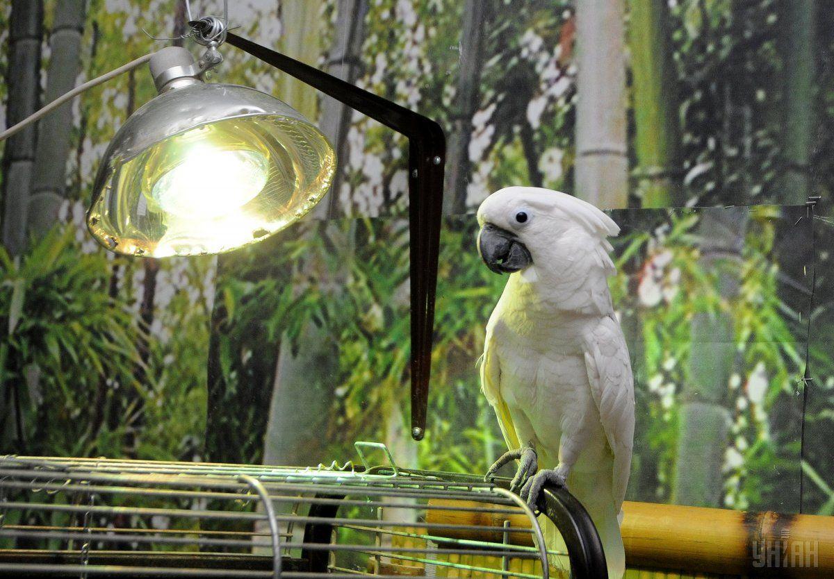 Попугай в ответ громко кричал / фото УНИАН