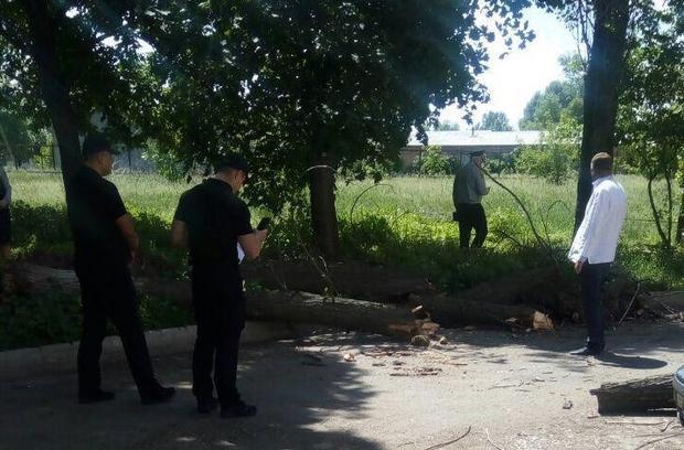 Одно дерево находилось в аварийном состоянии и упало на детей / фото Патрульная полиция Черкасской области