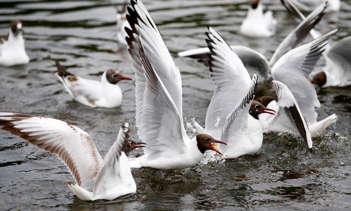 Сегодня - День белоснежных птиц / фото REUTERS