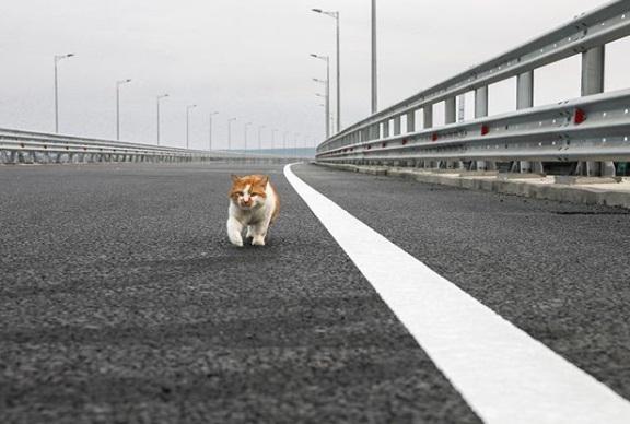 Кіт відкрив Кримський міст / фото instagram.com/cat_the_most
