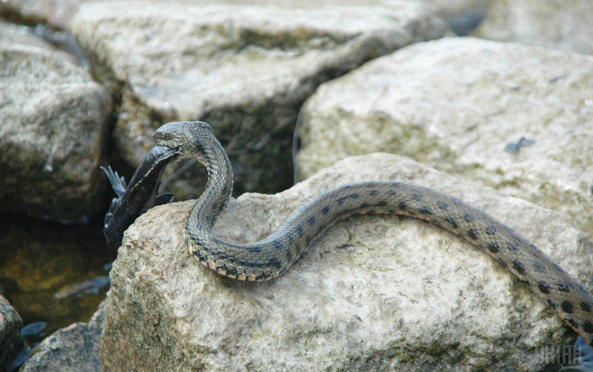 На Львовщине от змей пострадали два человека / Фото УНИАН