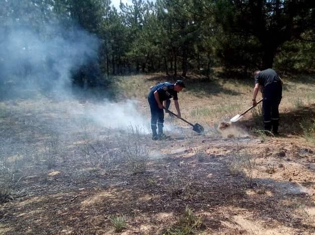 На Херсонщині сталася лісова пожежа / ДСНС