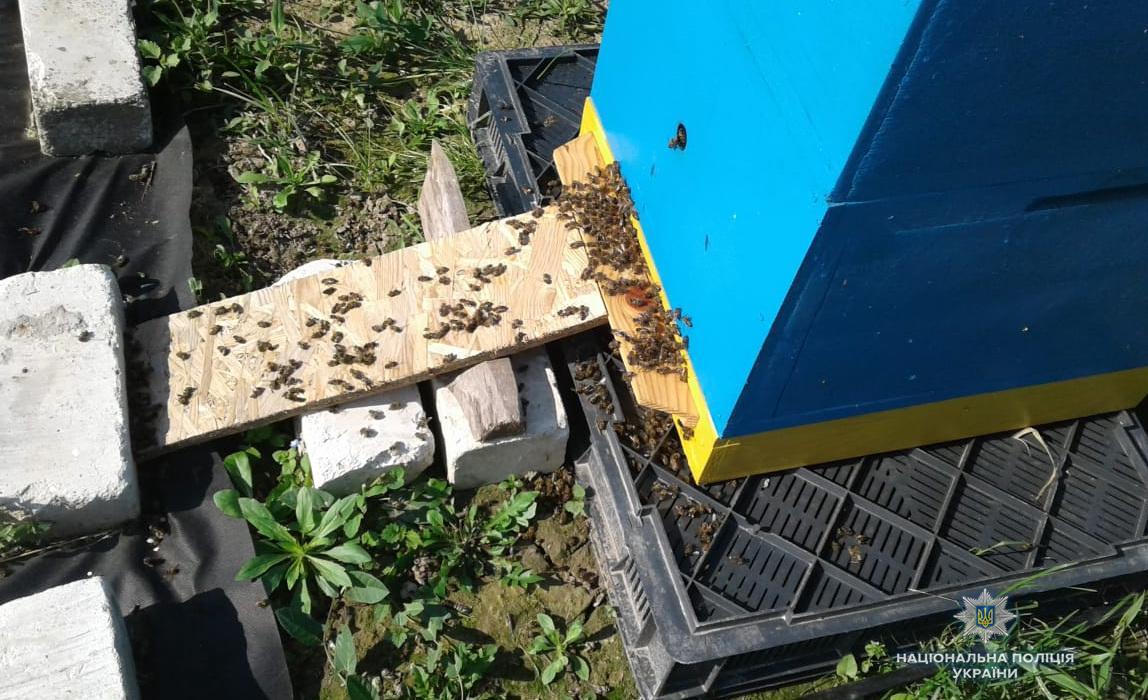 На Волині загинуло бизько 400 бджолиних сімей / фото vl.npu.gov.ua