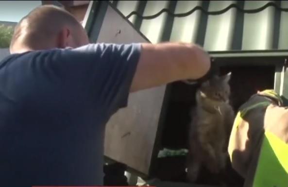 Как только кота вытащили, он сразу же убежал / Скриншот видео ТСН