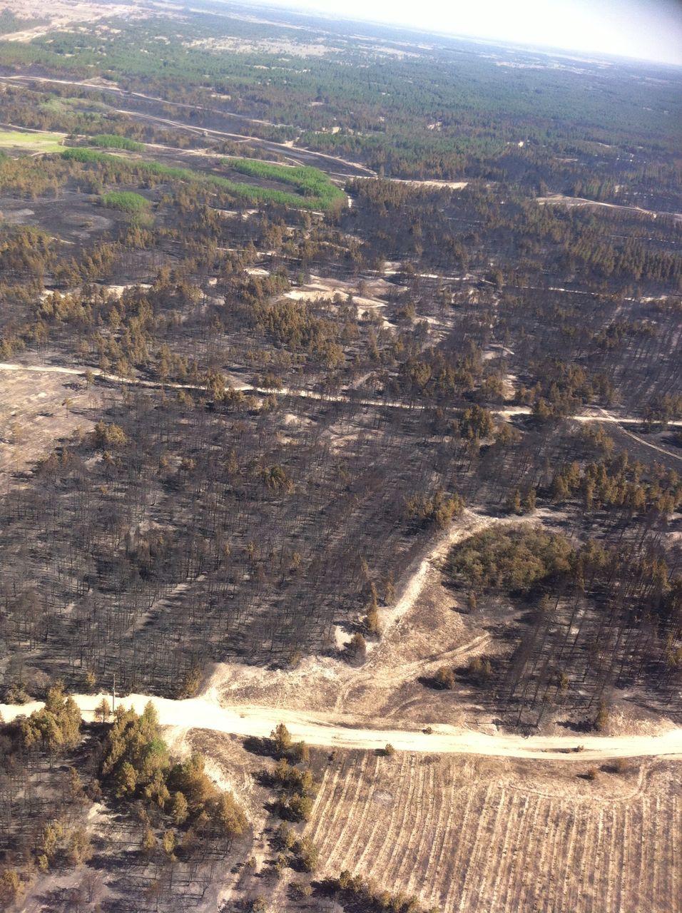 В Херсонській області продовжує горіти лісова пожежа / ДСНС