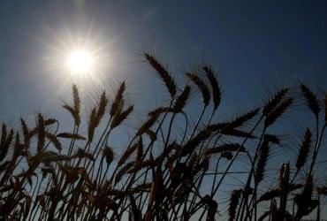 Синоптик прогнозує, що 2021 рік може стати найбільш неврожайним за сім років