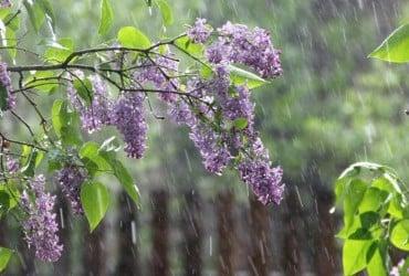Завтра в Украине пройдут дожди с грозами, на юге температура до +27° (видеопрогноз)