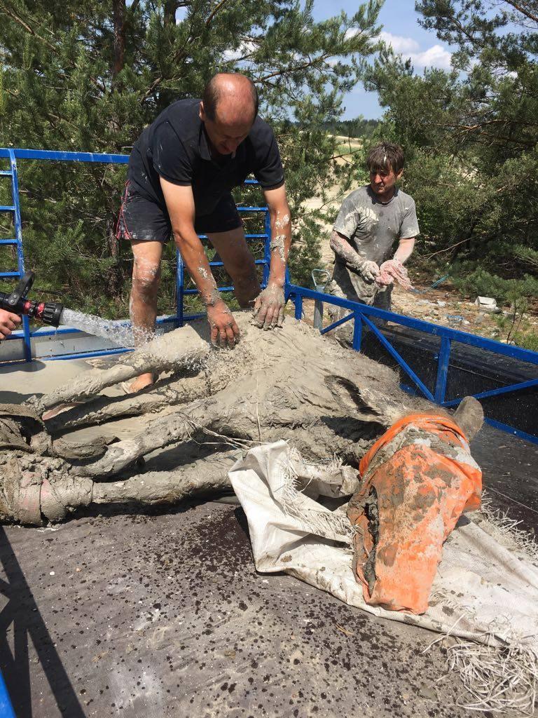 Тварин відмили від бруду і відпустили у ліс / фото facebook.com/dei.zt.ua