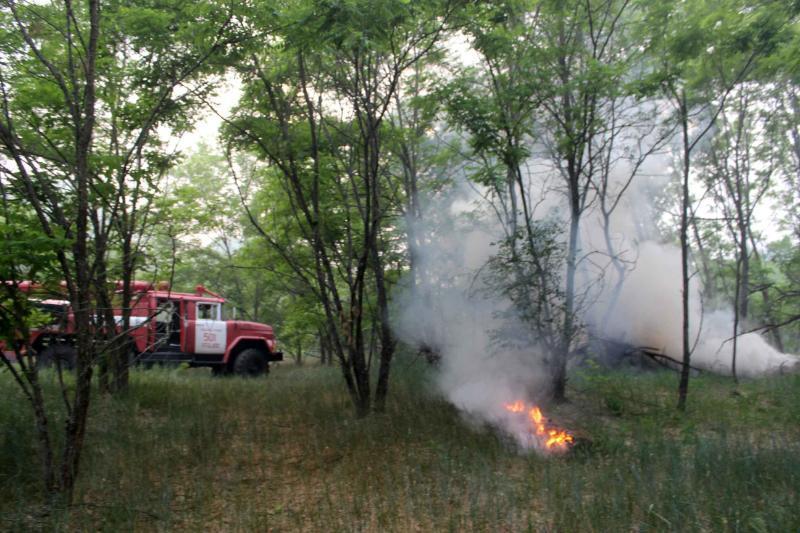 В Чорнобильському лісі продовжує тліти трава / ДСНС