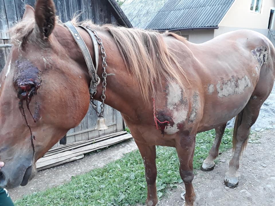 На Закарпатье мужчина жестоко поиздевался над лошадью / фото соцсети